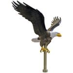 Eagle - Natural