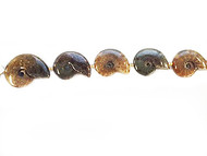 Ammonite Fossil Strand Polished 2 Sides - by the strand