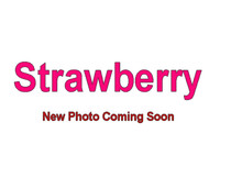 Strawberry - 5 Gallon Bag