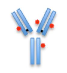 Antibody Drug Conjugates Service
