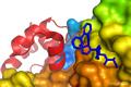 drug bioconjugates