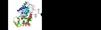 Thiol activated HRP (HRP-PEG4-SPDP)