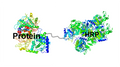 HRP Protein Conjugate HMW