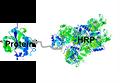 HRP Protein LMW Conjugate