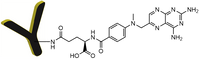 CM11407 Antibody Methotrexate Conjugates