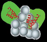 SepSphereTM Protein A agarose