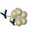 SepSphere™ Antibody Immobilization Kit