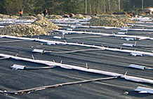 Photo of a geogrid