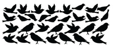 Bird Wall Decal Stickers Peel and Stick Flying and Sitting Removable and Reusable Vinyl Wall Art Decor Addon For Large Tree Decals #1387