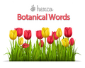 Topical List 'Botanical' eMentor - NEW!