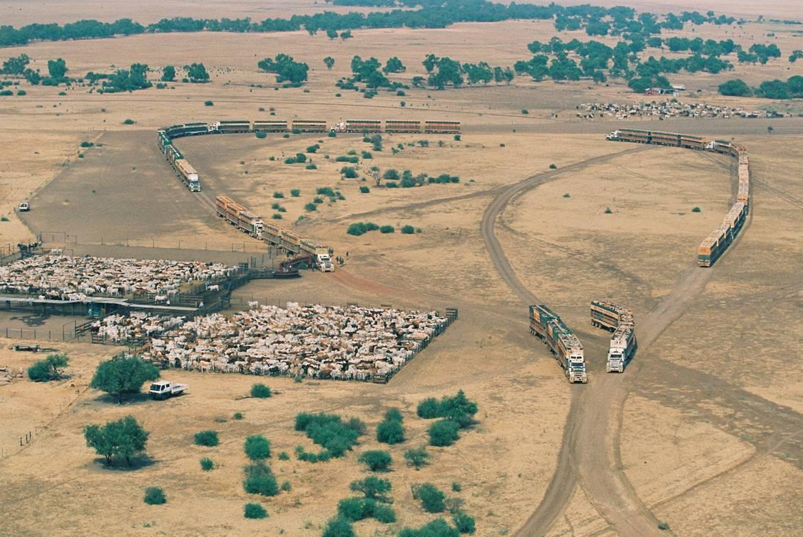 fes-cattle-muster2.jpg