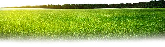 ban-green6.jpg