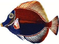 3D Metal Wall Angelfish