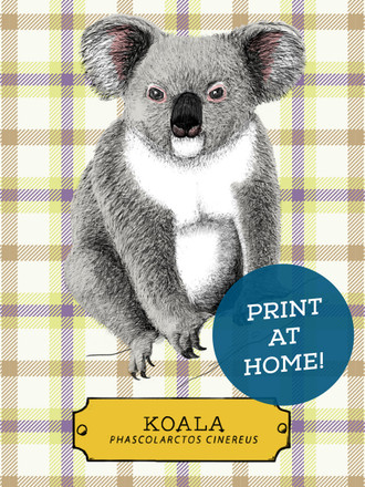 Illustrated Koala Printable