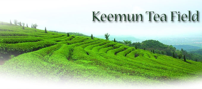 Keemun Tea Field