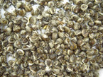 Certified Organic Jasmine Pearl Green Tea - 100 grams