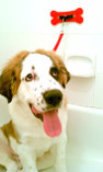 Wash, Dry, Travel and Train Your Dog Hands Free With Ease!