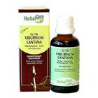 HerbalGem Gemmotherapy G76 Viburnum lantana 15 ml