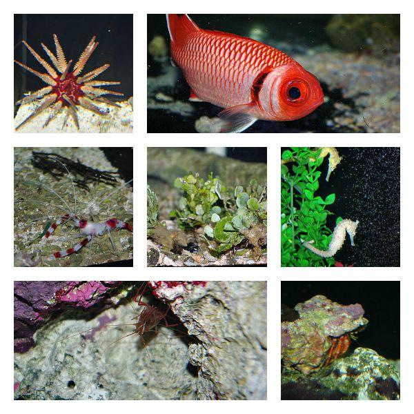 15-aug-marine-collage.jpg