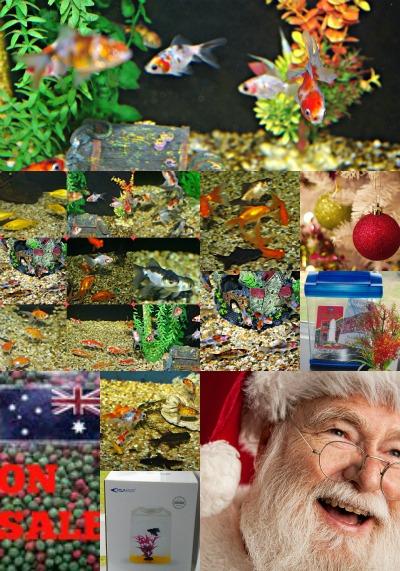 29-nov-on-sale-for-christmas.jpg