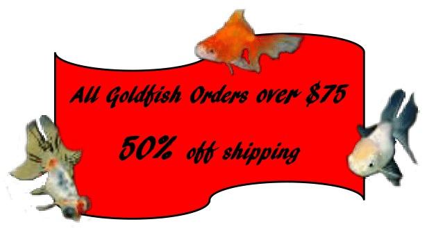 50-off-shipping-goldfish-1.jpg