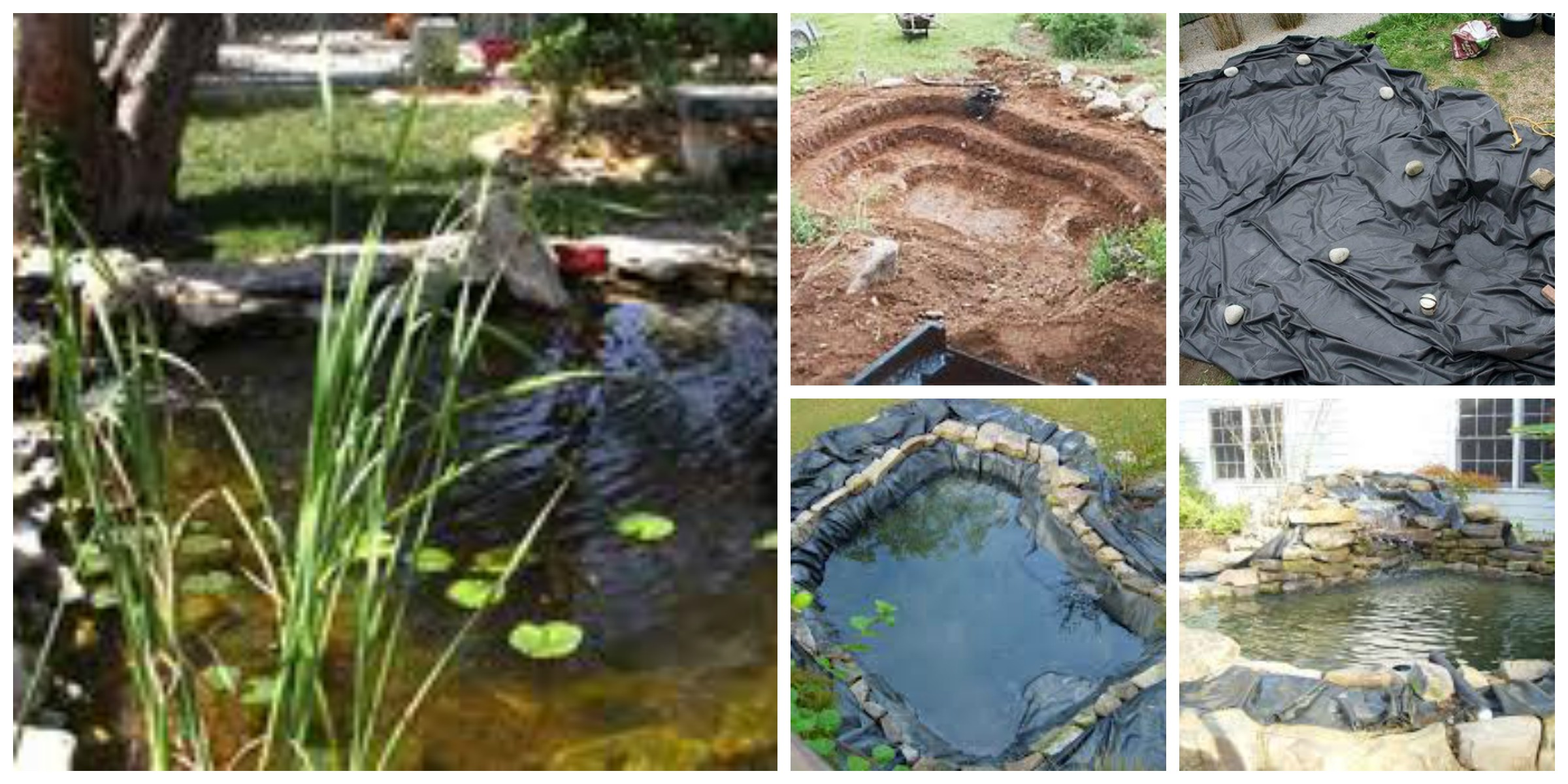 Build a koi pond windsor fish hatchery for Building a fish pond