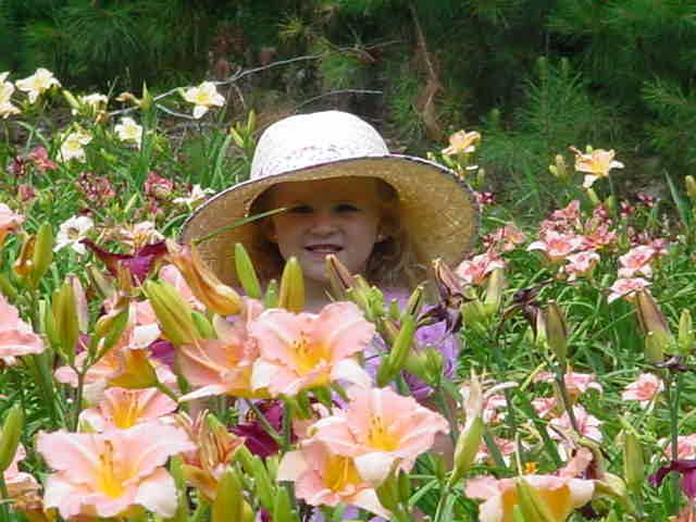 daylily-helper.jpg