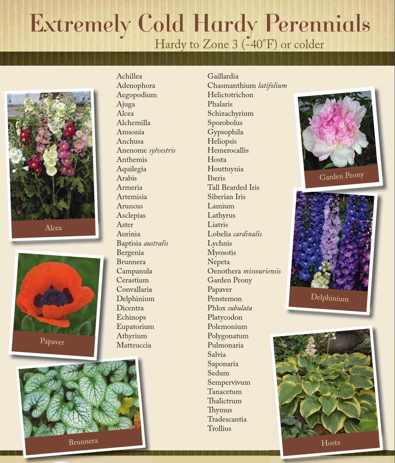Cold hardy perennials bloomin designs nursery mightylinksfo