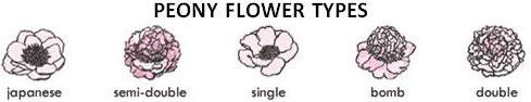 peony-flower-types.jpg