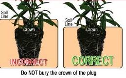 plant-plug.jpg