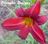 Hemerocallis CRIMSON RED
