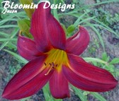 Daylily CRIMSON RED