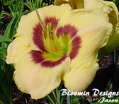 Daylily CUSTARD CANDY