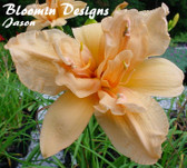 Daylily DOUBLE LOVE