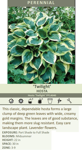 Twilight HOSTA Hosta Twilight PP14040 This classic, dependable hosta forms a large clump of deep green leaves with wide, creamy gold margins. The leaves are of good substance, making them more slug resistant. Easy care  EXPOSURE: Part Shade to Full Shade BLOOMS: Midsummer HEIGHT: 22 in SPACE: 30 in ZONE: 3-9