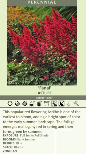 'Fanal' ASTILBE Astilbe 'Fanal' This popular red flowering Astilbe is one of the earliest to bloom, adding a bright spot of color to the early summer landscape. The foliage emerges mahogany red in spring and then turns green by summer.  EXPOSURE: Full Sun to Full Shade BLOOMS: Early Summer HEIGHT: 20 in SPACE: 18-20 in ZONE: 4-9