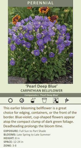 Pearl Deep Blue CARPATHIAN BELLFLOWER Campanula c. Pearl Deep Blue HEIGHT: 8 in SPACE: 12-24 in ZONE: 3-8