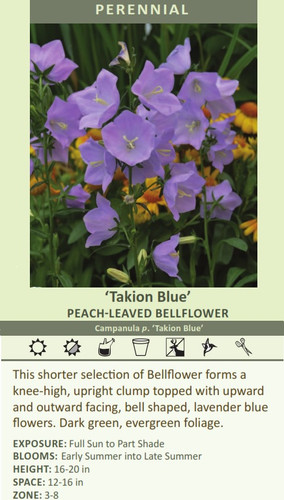 'Takion Blue' PEACH-LEAVED BELLFLOWER Campanula p. 'Takion Blue' This shorter selection of Bellflower forms a knee-high, upright clump topped with upward and outward facing, bell shaped, lavender blue flowers. Dark green, evergreen foliage. EXPOSURE: Full Sun to Part Shade BLOOMS: Early Summer into Late Summer HEIGHT: 16-20 in SPACE: 12-16 in ZONE: 3-8
