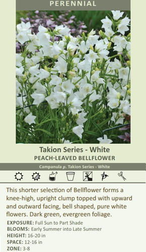 Takion Series - White PEACH-LEAVED BELLFLOWER Campanula p. Takion Series - White This shorter selection of Bellflower forms a knee-high, upright clump topped with upward and outward facing, bell shaped, pure white flowers. Dark green, evergreen foliage. EXPOSURE: Full Sun to Part Shade BLOOMS: Early Summer into Late Summer HEIGHT: 16-20 in SPACE: 12-16 in ZONE: 3-8