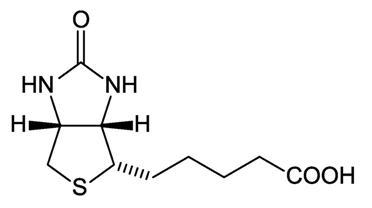 biotin-page.jpg