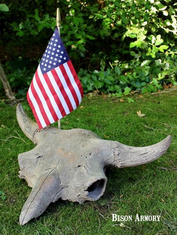 American Buffalo Skull