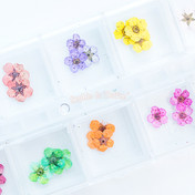 Assorted Small Dried Real Flowers with Container