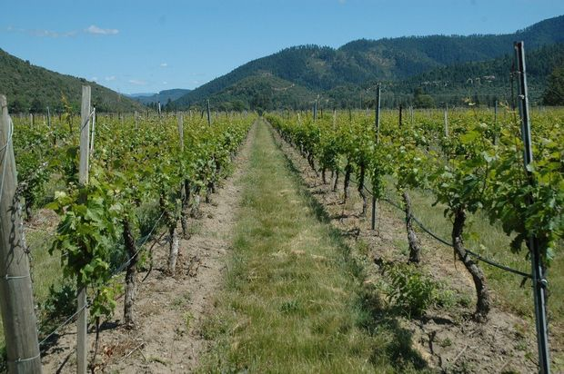 applegate-vineyard.jpg
