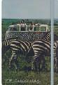 VW Safari Campervan Diary Notebook