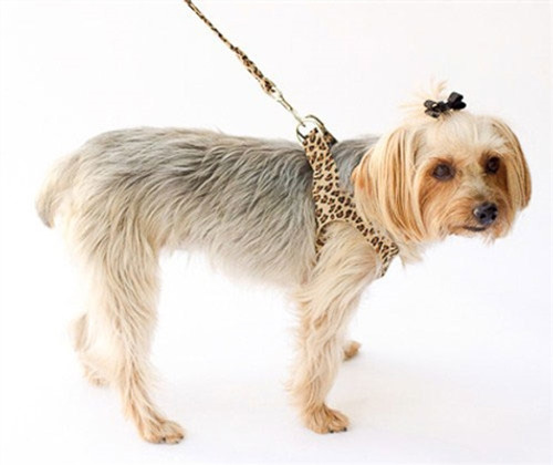 Leopard Starlet Step In Ultra Suede Harness