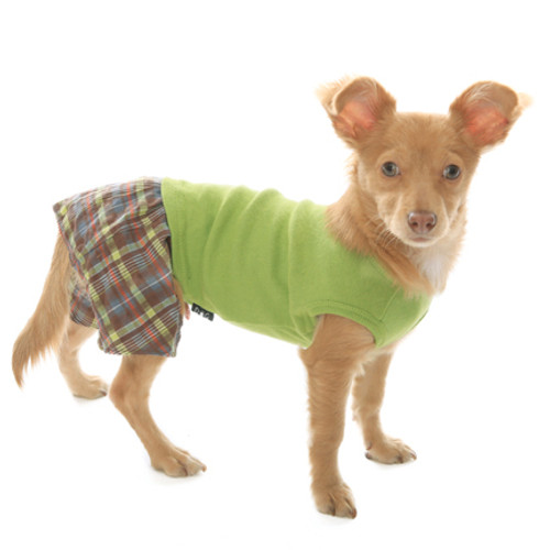 Brown & Lime Seersucker Boxer Shorts for Dogs