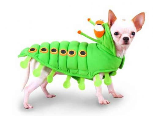 Caterpillar Costume