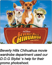 beverly-hilss-chihuahua-sty.png