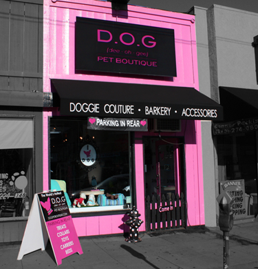 dog-front-store.png