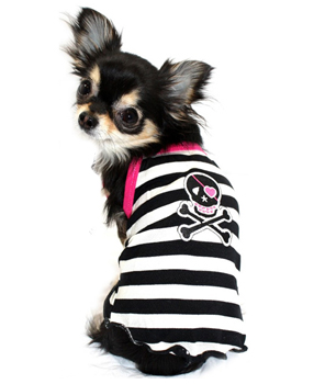 dog-pet-boutique-chihuahua.jpg